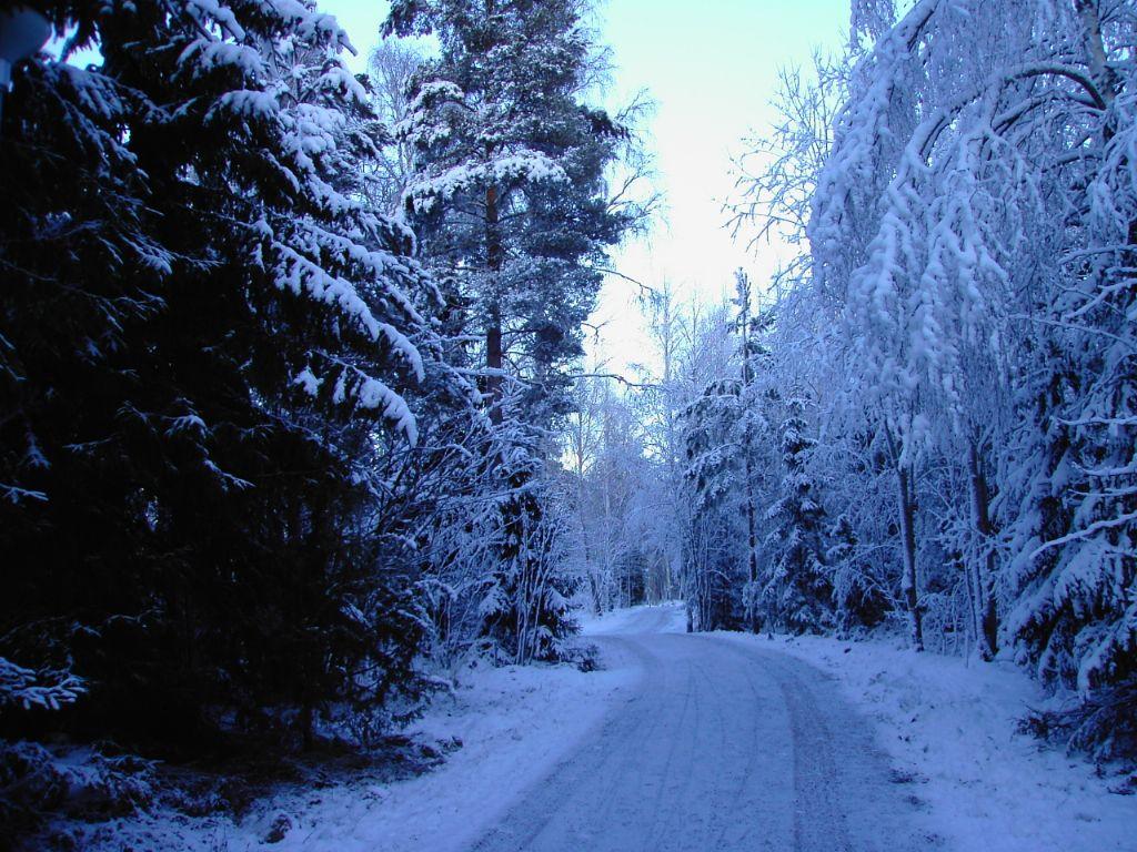 """Результат пошуку зображень за запитом """"фото швеция зима"""""""