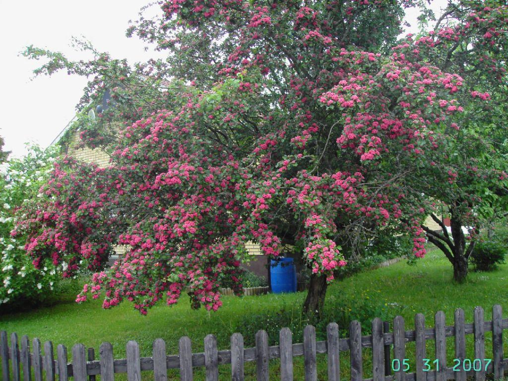 Поздравляю. Вы - Розовое дерево. наивное, романтичное, стройное и
